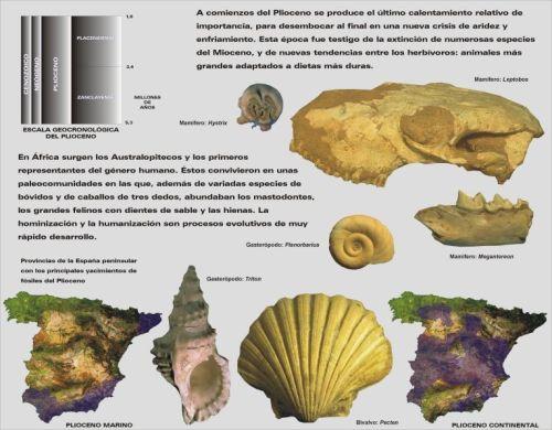 plioceno