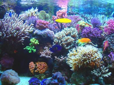 corales22