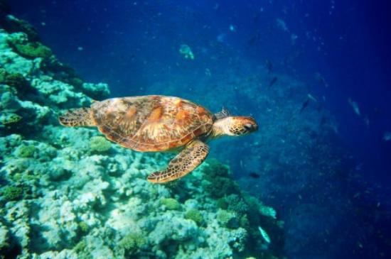 corales23