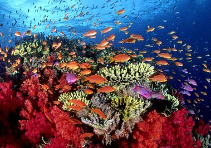 corales7