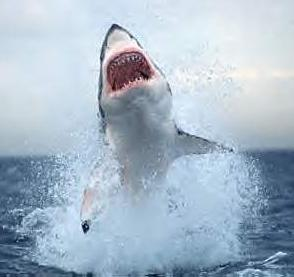 Peligrosas especies de tiburones.